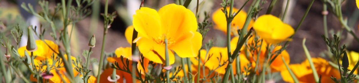 Skicka blommor med bud