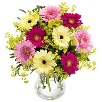 Blombukett med germini i blandade, fina färger. Blommorna hittar du hos Euroflorist.