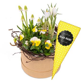 Rund ask med påskplantering plus en chokladstrut. Skicka presenten med ett blombud från Euroflorist!