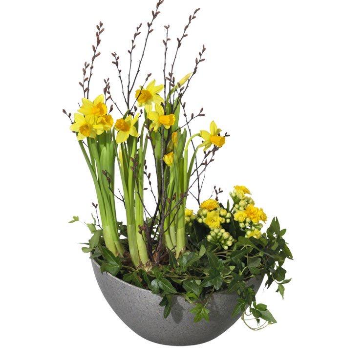 Påskplantering med gula minipåskliljor, murgröna och minivåreld. Finns hos Interflora.