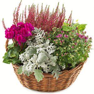 HÖstgrupp med blommor i lila tillsammans med grönt. Ett fantastiskt höstarrangemang från Euroflorist.