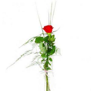 Enkel röd ros, Florister i Sverige.