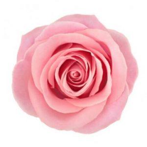 Gratta med ett fång rosa rosor från Florister i Sverige!